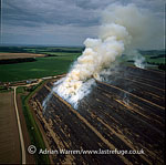 Lavender Fields burning, Heacham, Norfolk, England