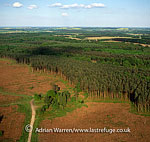 Sherwood Forest with Cottam Power Station in background, Nottinghamshire, England