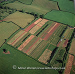 Celtic style cultivation at Netherton, Near Newton Abbot, Devon, England