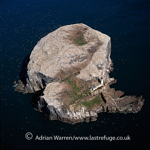Bass Rock and its Gannet colony (an island in the outer part of the Firth of Forth in the east of Scotland, approximately one mile off North Berwick), Lowlands, Scotland