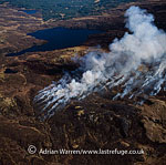 Bush Fire, Isle of Bute, Highlands, Scotland