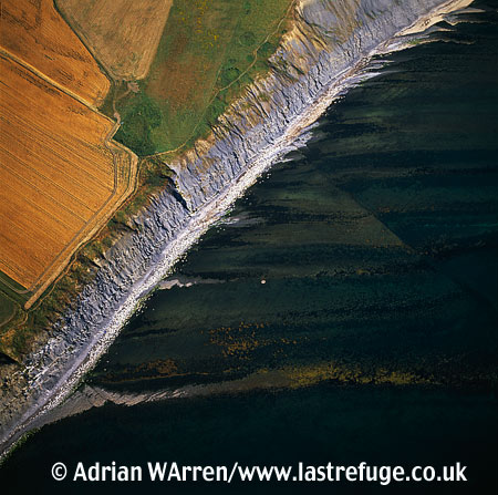 Kimmeridge Ledges, Jurassic Coast, Dorset
