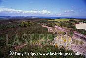 Studland Heath. National Nature Reserve, Purbeck, Dorset, UK