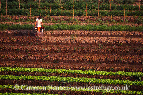 Watering Vegetable Crops, Riverbank, Mekong River, Luang Prabang, Laos