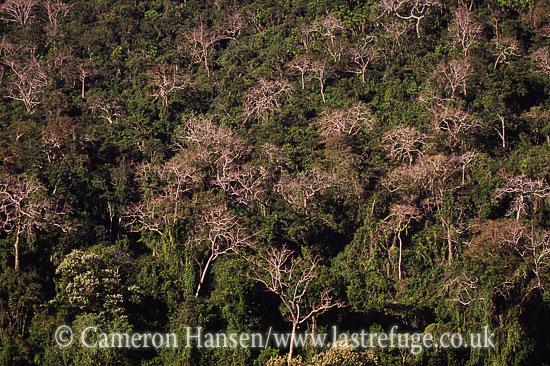 Dense Forest, Udomxai Province, Laos