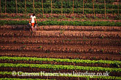 Watering Vegetable Crops, Riverbank, Mekong River, Luang Prabang, Laos