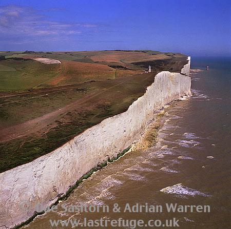 White Cliffs at Beachy Head, East Sussex, South east England, England
