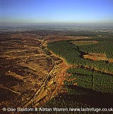 Cannock Chase - moor land and forest, Staffordshire, England