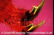 Spider Claw