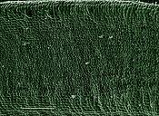 Scanning Electron Micrograph (SEM): Yew Leaf