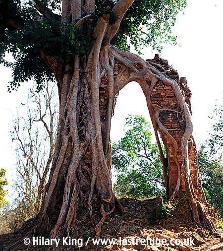 Sambor Prei Kuk, pre-Ankorian sites, dating frm 7th century, Kampong Thom, Cambodia