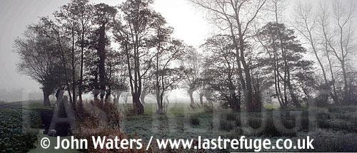 Panorama: Misty scenic, Tealham Moor, Somerset Levels, UK