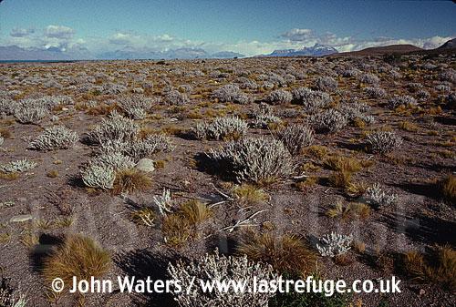 Mobile sand & vegetation, Santa Cruz, Patagonia, Argentina