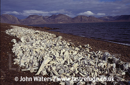 Aftermath of beluga whaling camp-abandoned 1940, Svalbard, Norway, Scandanavia, Arctic