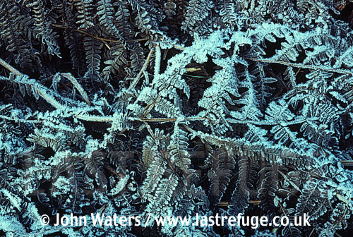 Winter scene frost patterns on bracken, UK