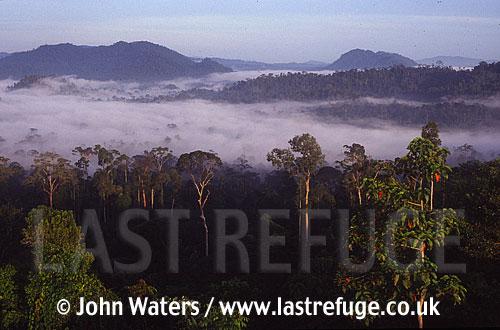 Danum Valley Rainforest, Sabah, Borneo