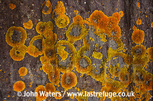Lichen on rocks, UK