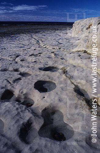 Limestone platform, Low Tide, Patagonia, Argentina