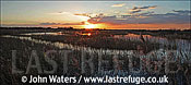 Panorama: Sunset, Reedbeds (Phragmites commuis), Westhay Nature Reserve, Somerset Levels, UK