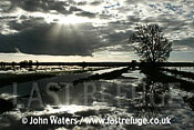 Flooded Farmland, Tadham Moor, Somerset Levels, UK