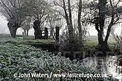 Frosty scene, Tadham Moor, Somerset Levels