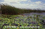 Aquatic Vegetation, Ibera Marshes, Argentina