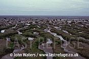 Intertidal mud banks Bridgewater Bay, UK
