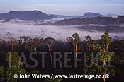 Danum Valley Rainforest, Sabah, Borneo