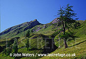 Scattered larches at tree line (mountain), Swiss Alps, Switzerland, Europe