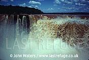 Iguazu Falls, Argentine bank, Argentina