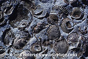 Marine fossil bed, Peninsula Valdes, Patagonia, Argentina