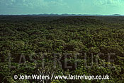 Dense Scrub Forest, Yucatan, Mexico