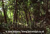 Scrub Forest, Yucatan, Mexico