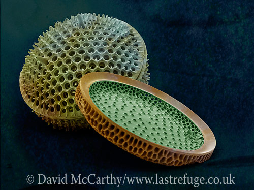 Scanning Electron Micrograph (SEM): Marine Diatoms; Magnification x2400 (when printed A4, 29.7 cm cm wide)