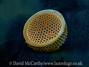Scanning Electron Micrograph (SEM): Marine Diatom; Magnification x2400 (when printed A4, 29.7 cm cm wide)