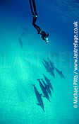 Cameraman,Michael Pitts with Spinner Dolphins,Midway.