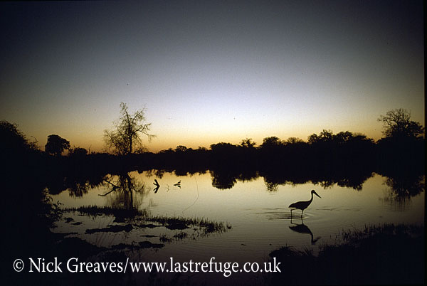 Mpufu Pan at dusk, Hwange National Park, Zimbabwe