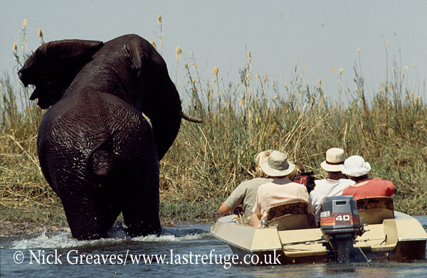 African Elephant (Loxodonta africana), with tourists on boat, Matetsi Private Game Reserve, Victoria Falls, Zimbabwe