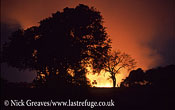 Bush fire at night, Moremi Game Reserve National Park, Botswana