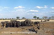 African Elephant (Loxodonta africana), herd at Pan, Hwange Safari Lodge, Zimbabwe, waterhole, water pan