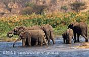 African Elephant (Loxodonta africana), Zambezi National Park, Zimbabwe