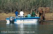 African Elephant (Loxodonta africana), with tourists, Victoria Falls, Zimbabwe