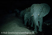 African Elephant (Loxodonta africana), at night, Hwange National Park, Zimbabwe