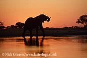 African Elephant (Loxodonta africana), bull at Makololo Pan, sunset with reflections in river, Hwange National Park, Zimbabwe