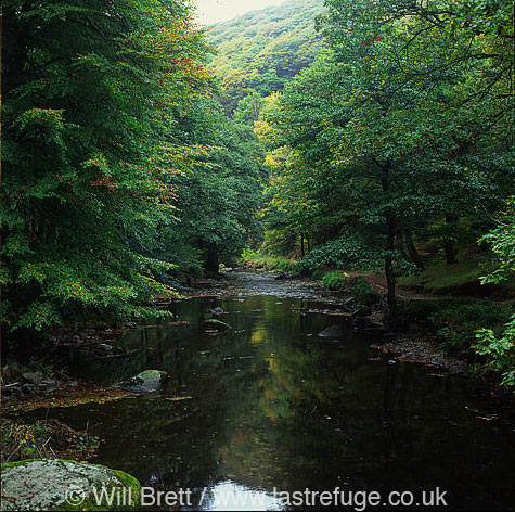East Lyn River between watersmeet and Brendon, steep valley with autumn foliage. One of the rivers contributing to the lynmouth flood