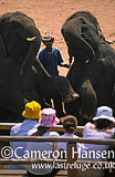 Asian elephant Show, Chiang Mai Province, Thailand