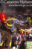 Asian Elephant - Songkran Festival (Water Festival), Bangkok, Thailand