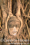 Buddha's Head in Fig Tree, Wat Phra Mahathat, Ayuthaya, Thailand