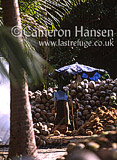 Coconut Stock Pile, Koh Pha Ngan, Thailand