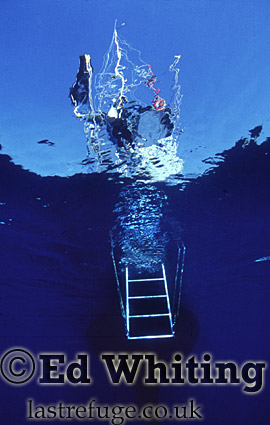 Scenic, Drop in the blue, Diver leaving the water onto a sail boat, The Andaman Islands, underwater, India